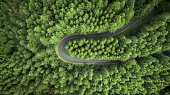Aerial view of a curved road surrounded by pine trees field.