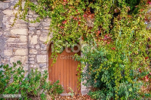 A quaint, old-fashioned stone wall and a vintage wooden door with a rounded top are partially covered by thick, green climbing vines. The green leaves are beginning to turn red in the autumn season. It looks like the entrance to a secret garden or fairy tale house in the forest.