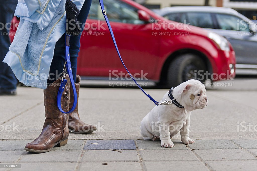 Street waking with puppy dog stock photo