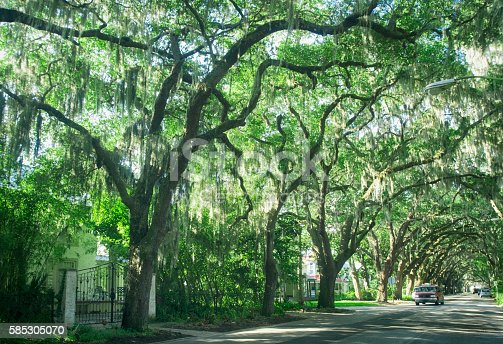 istock Street with live oaks in St. Augustine, Florida 585305070