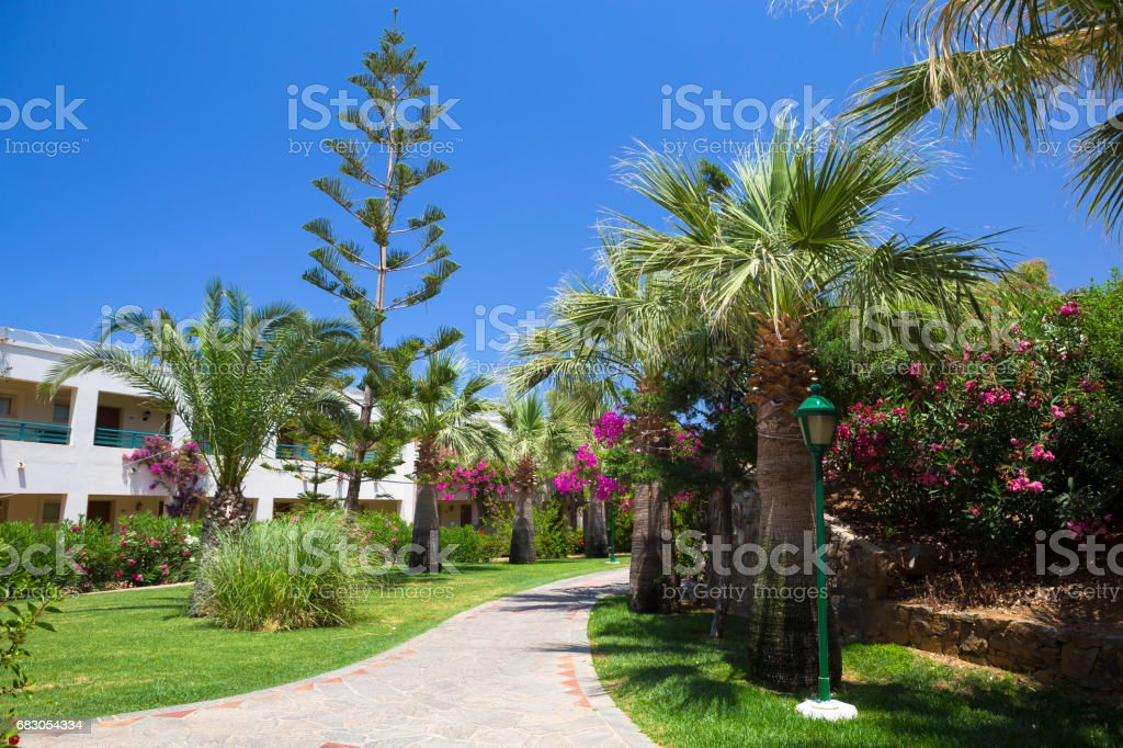 Street with palms in the beautiful living area foto de stock royalty-free