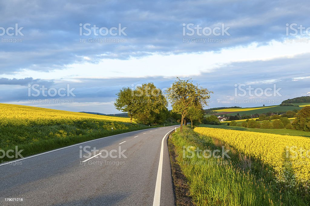 street with rape field under blue sky royalty-free stock photo