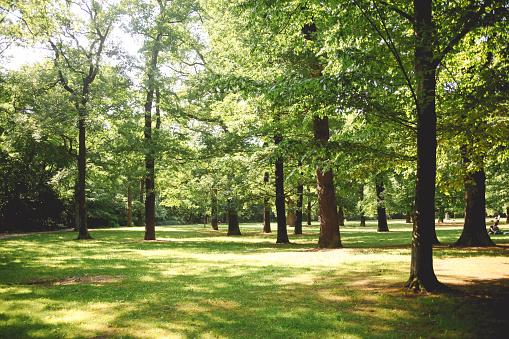 Vintage toned image of a forest in the Berlin central city park, in Kreuzberg - Neukölln district, near Tempelhof airport.
