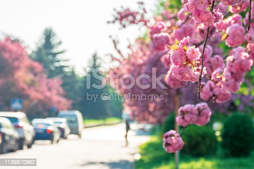 825525754istockphoto streets of old town in sakura blossom 1139870982