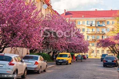 825525754istockphoto streets of small town in cherry blossom 1187296124