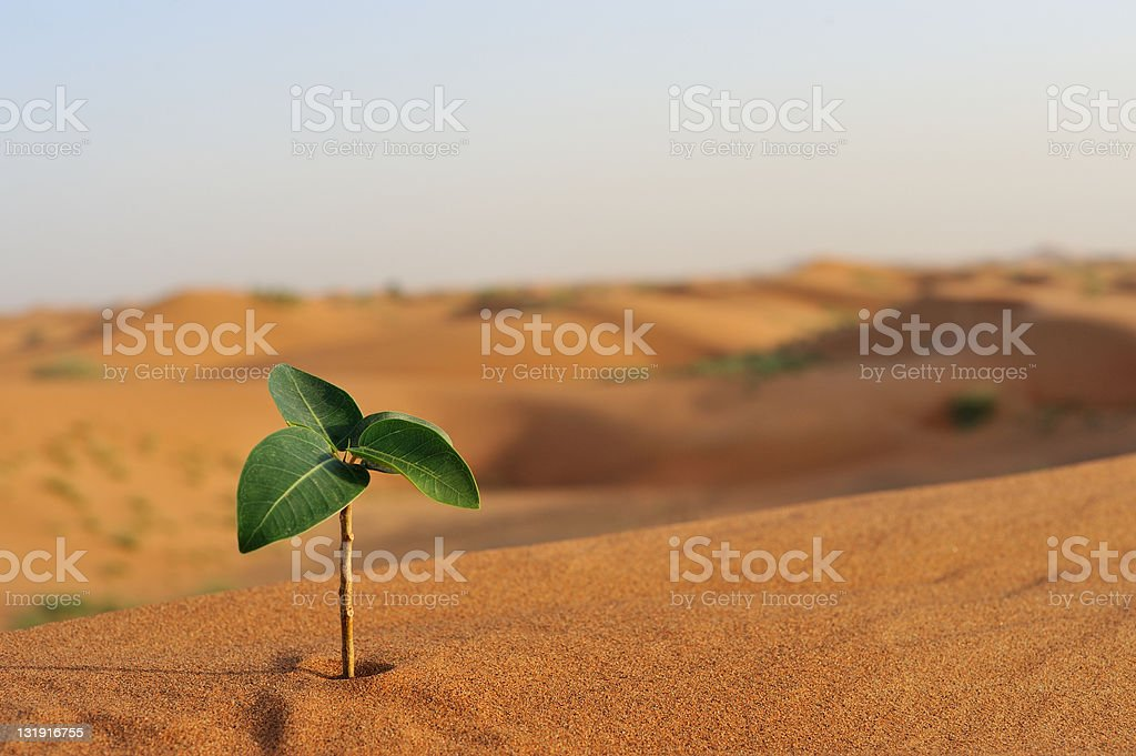 strength and perserverance royalty-free stock photo