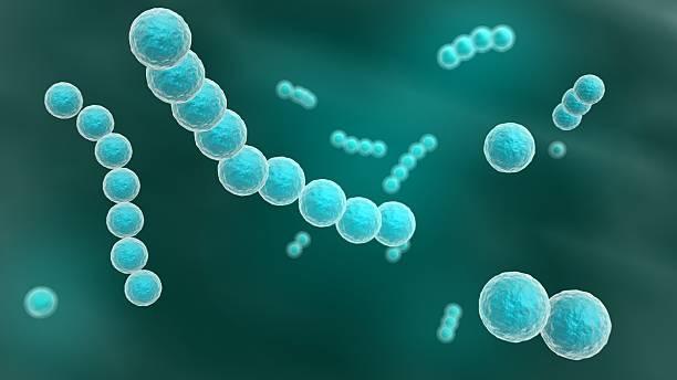 Streptococcus stock photo