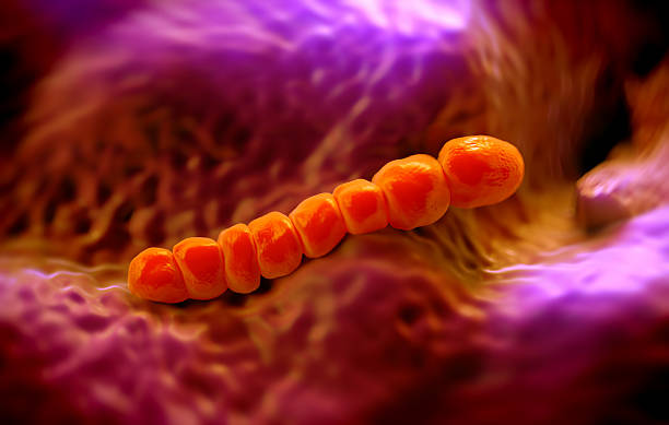 Streptococcus pneumoniae, or pneumococcus stock photo