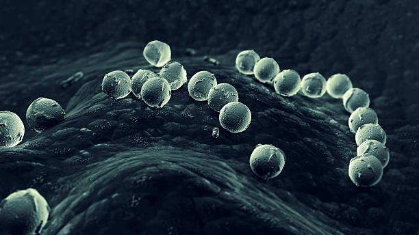 streptococcus pyogenes stock photo