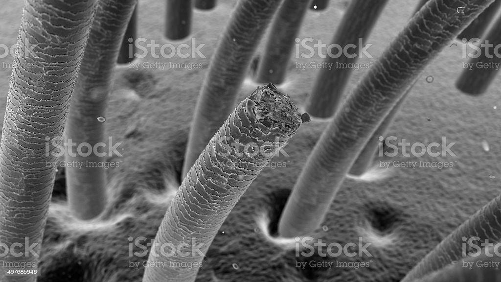 Podkreślił i do włosów pod mikroskop stockowe zdjęcia i więcej