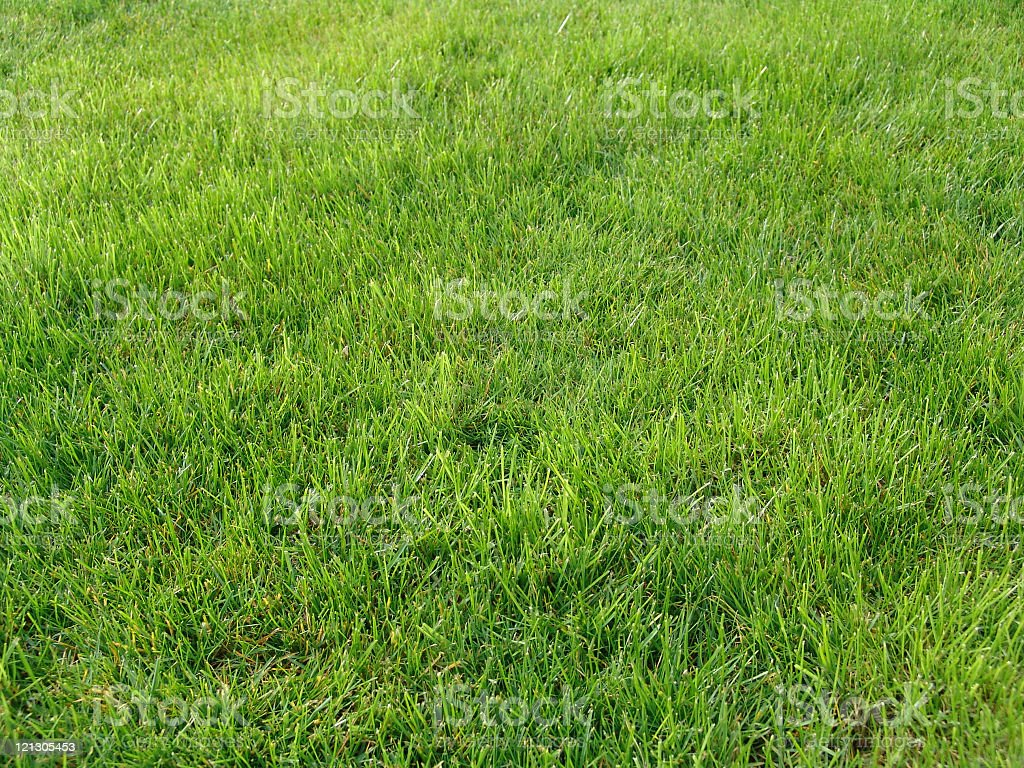 A stretch of fresh vibrant green grass royalty-free stock photo