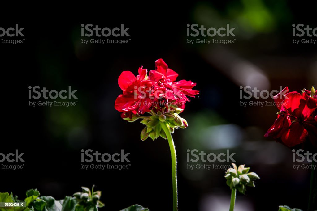 Striking floral beauty royalty-free stock photo