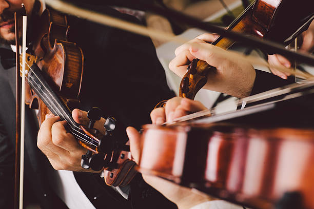 String instrument musicians. String instrument musicians. Performing a musical piece. string instrument stock pictures, royalty-free photos & images