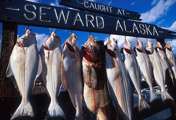 String of fresh fish hanging on a line in Alaska stock photo