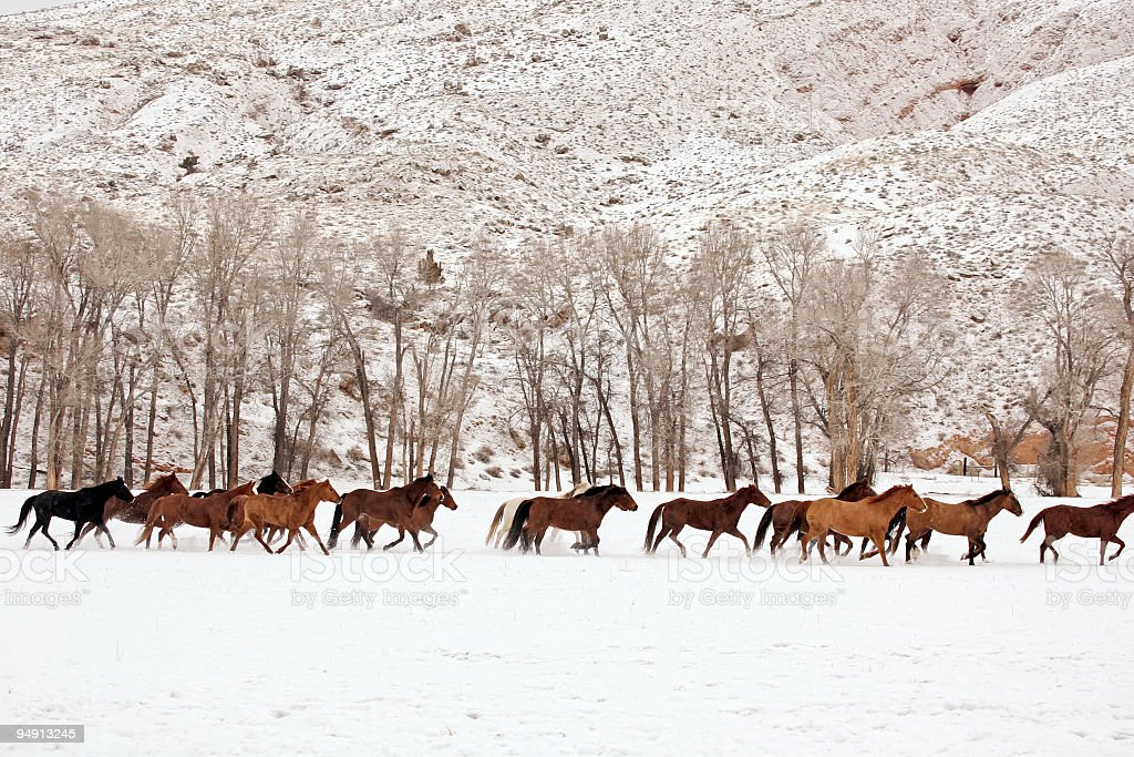 String of Horses royalty-free stock photo
