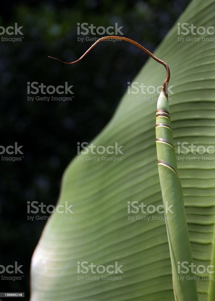 string stock photo