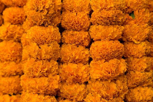 Strings von orange Ringelblume Blumengirlanden an einer Wand aufhängen – Foto