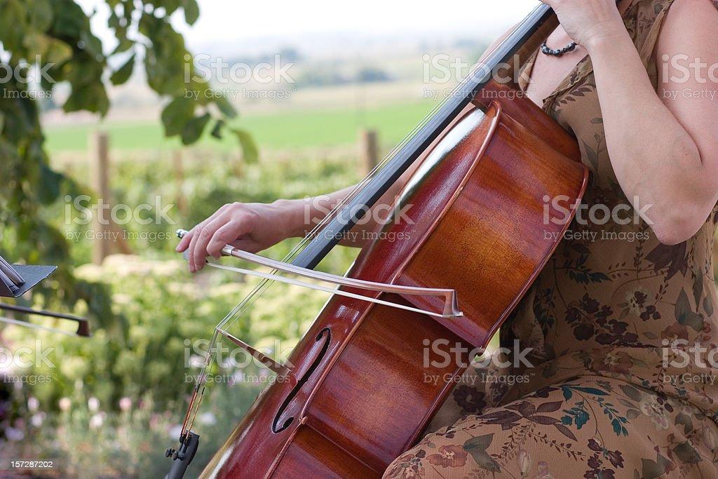 Streichinstrumente – Foto