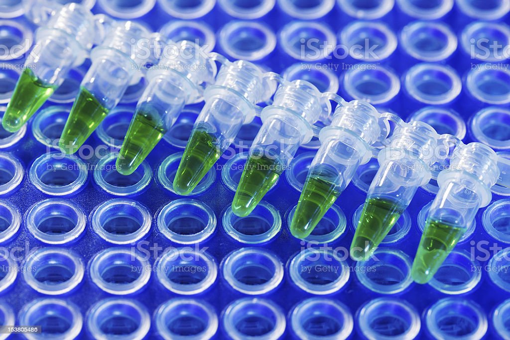 PCR strip and multiwell stock photo