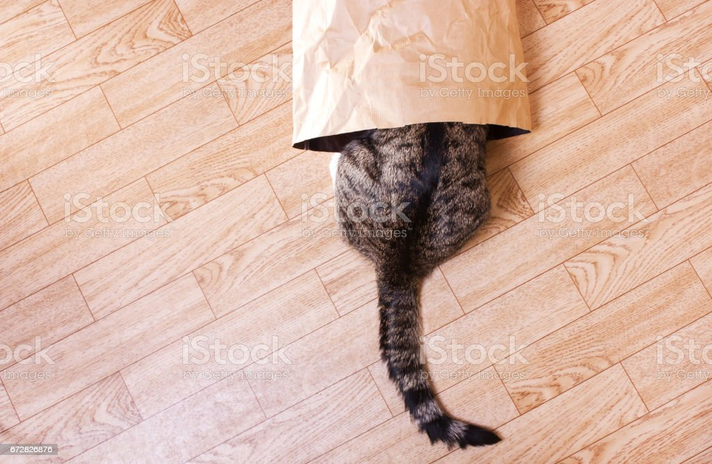 striped cat sits, hid in a paper, craft package stock photo