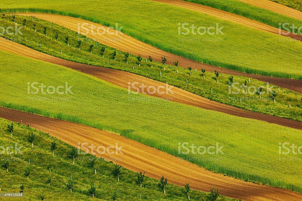 Striped fields of South Moravia stock photo