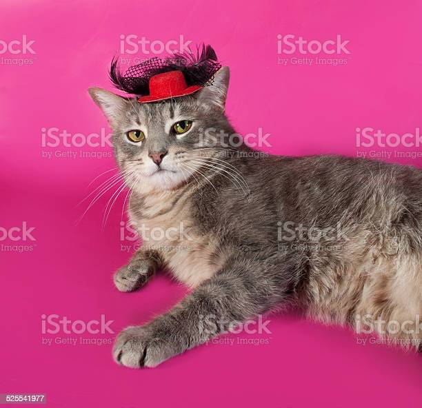 Striped gray cat with red hat lying on pink picture id525541977?b=1&k=6&m=525541977&s=612x612&h=vsxwoyypocagnki9iy4bv3qmgdsr82q4l8zupjrvuv4=