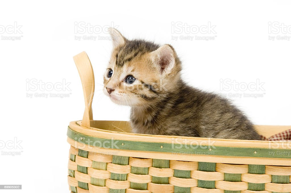 Полосатый kitten в корзину Стоковые фото Стоковая фотография