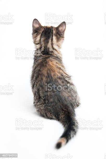 Striped kitten picture id452764313?b=1&k=6&m=452764313&s=612x612&h=il4lil5 vpejpineq3bvekwhaa20v28n7xf4 aecvua=