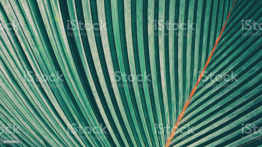 Striped of palm leaf stock photo