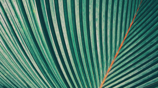 striped of palm leaf - foliate pattern stock photos and pictures