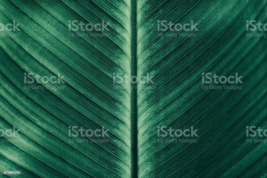striped of tropical palm leaf stock photo