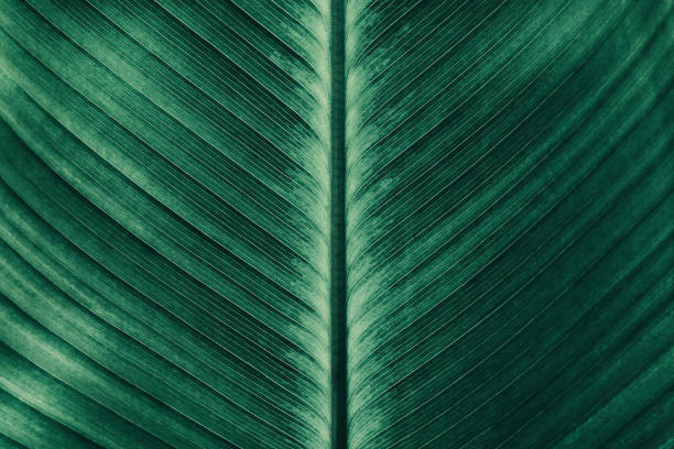 striped of tropical palm leaf - foliate pattern stock photos and pictures