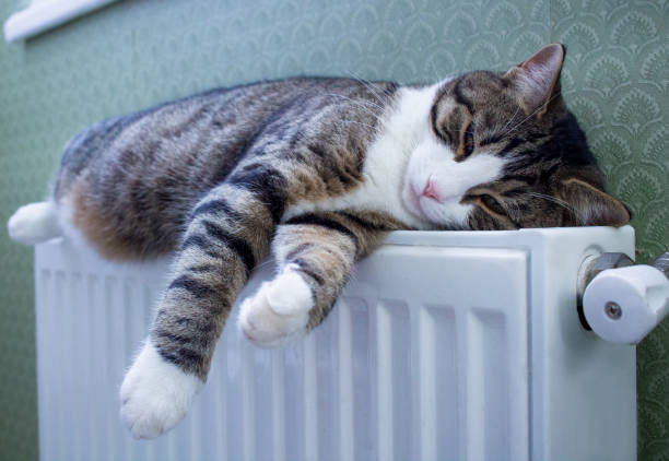 Striped pet cat lying on warm radiator rests and relaxes picture id1050340148?b=1&k=6&m=1050340148&s=612x612&w=0&h=yd qme35k5wegizgfuq9ydam7cepkfyxfyopuk2uaik=