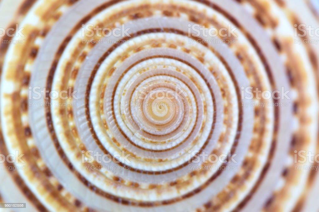 ストライプ スパイラル貝殻自然なパターンの抽象的な背景 ストックフォト