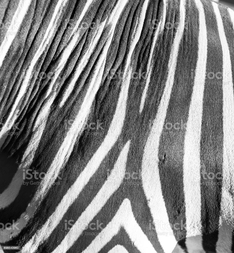 stripes zebra like background stock photo