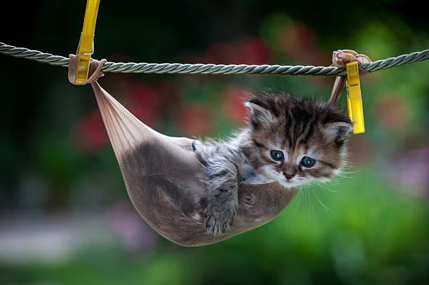 gestreifte kleine kätzchen in einem weihnachtsstrumpf hängen am seil - horizontal gestreiften vorhängen stock-fotos und bilder