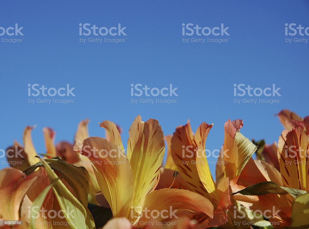 Striving for the sky royalty-free stock photo