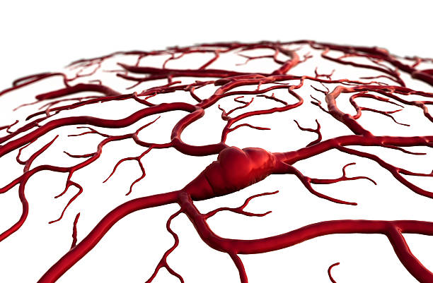 stroke insult, brain, Brain Model, brain surfase, circulatory system, disease, heart attack, Capillary, circulatory system on the white background cerebellum stock pictures, royalty-free photos & images