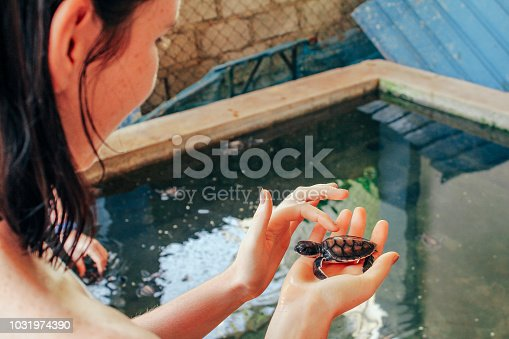 A young woman holds a baby sea turtle at the Kosgoda Sea Turtle Conservation Project, Sri Lanka.