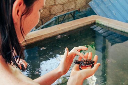 Stroking a Baby Sea Turtle in Sri Lanka