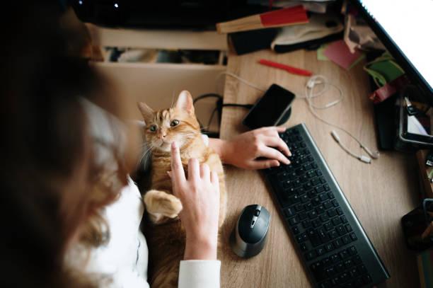 Stroking a cat by a computer picture id1287255386?b=1&k=6&m=1287255386&s=612x612&w=0&h=tjufutzct5wdlbwtmrwy1qx2wtnfukeg0liniu3n2na=