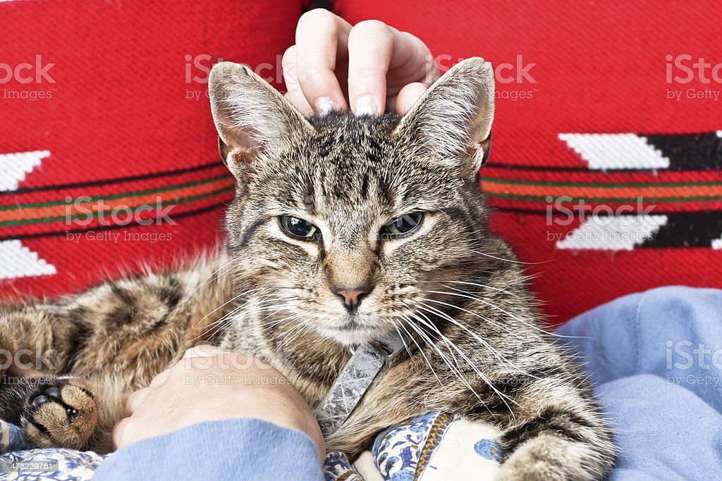 Stroking a cat stock photo