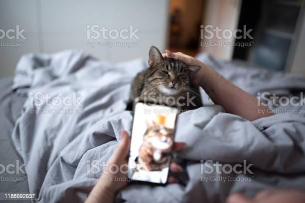 Stroking cat picture id1188692637?b=1&k=6&m=1188692637&s=612x612&h=mqbjwf3yejkmyqkmuf0d4a b5owgpw4bnourfxexkb4=