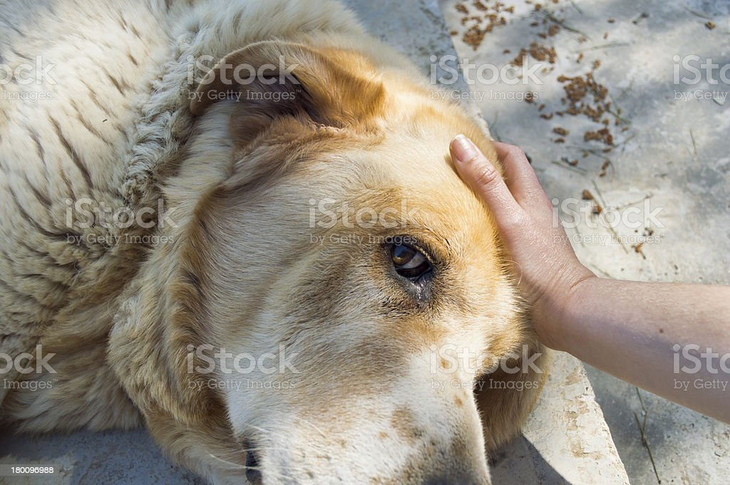 stroking her blond dog royalty-free stock photo