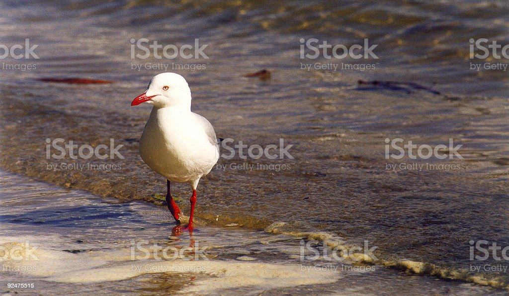 Strolling the Beach royalty-free stock photo
