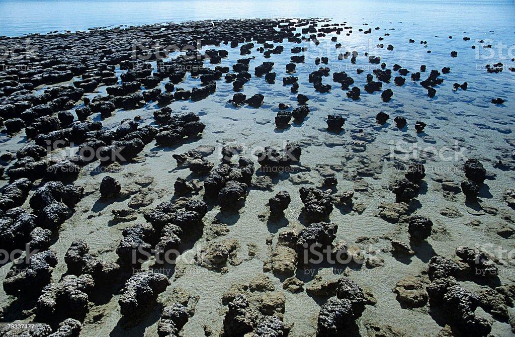 Stromatolites in hamelin pool royalty-free stock photo