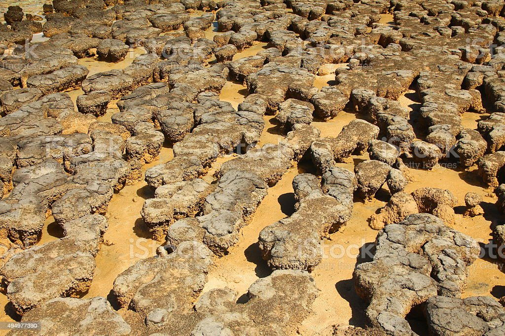 Stromatolites in Shark Bay, Australia stock photo