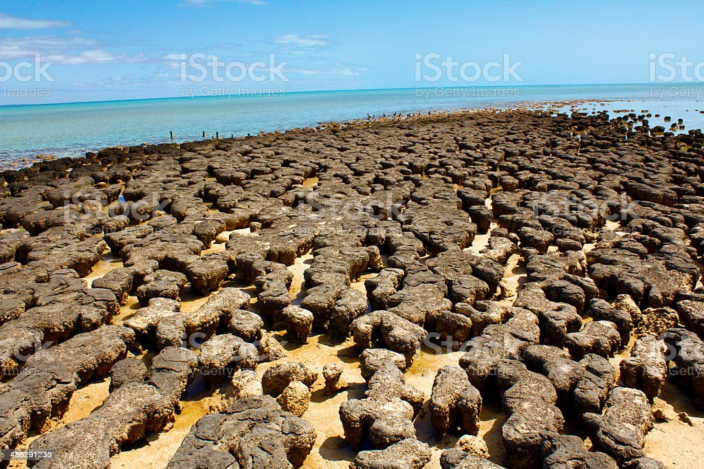 Stromatolites in west australia stock photo