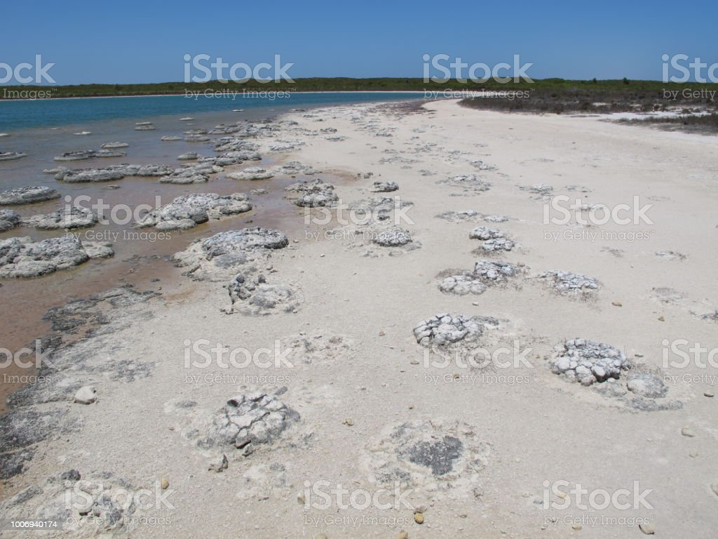 Stromatolites - Shark Bay World Heritage Area stock photo