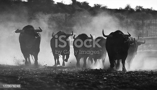 Strong bulls